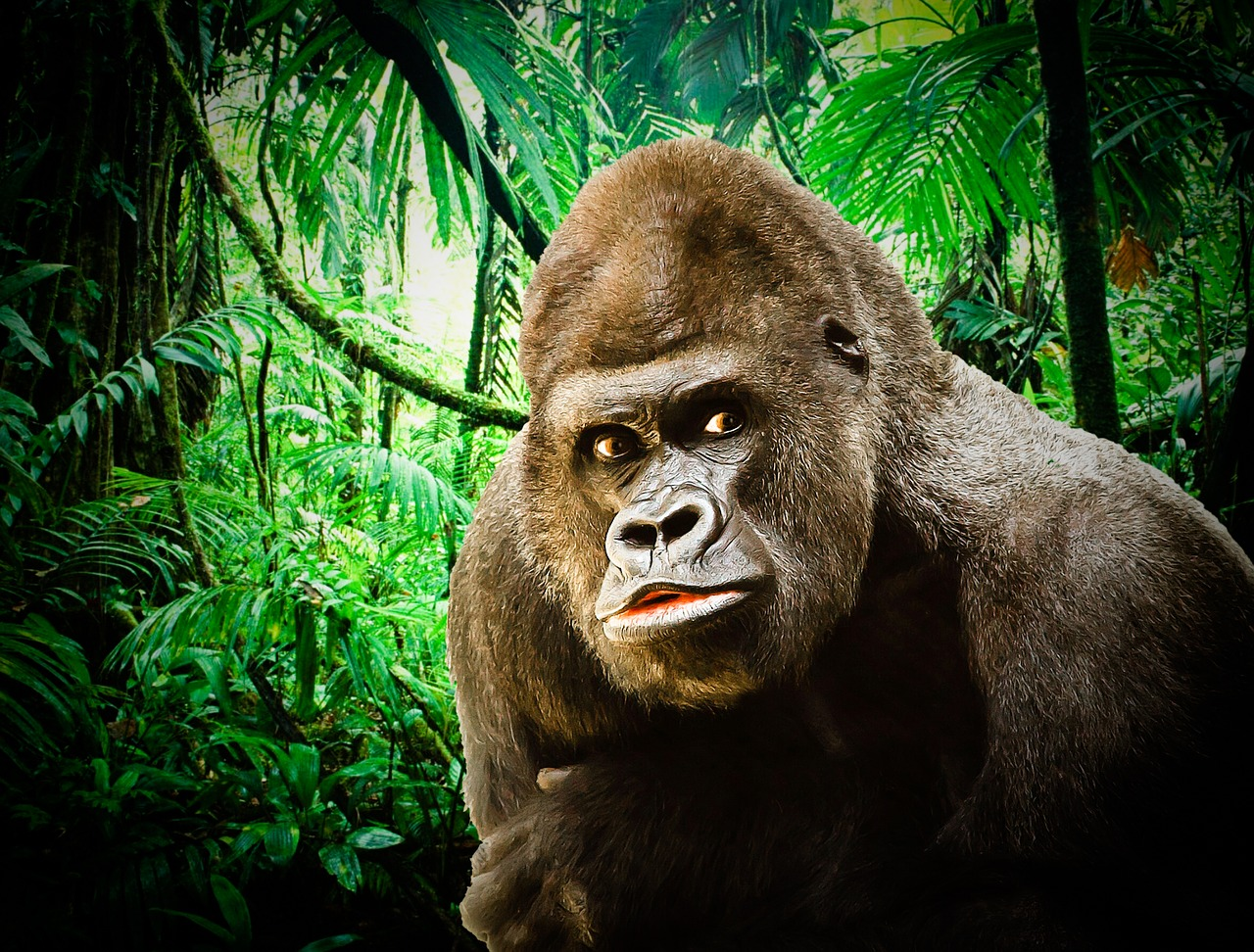 Gorilla Meme. A gorilla looking to the right with a jungle in the background.