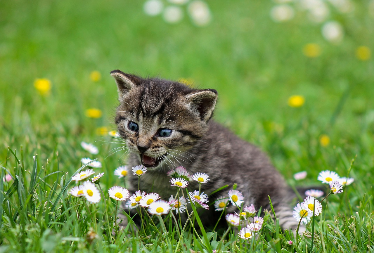 A kitten playing with flowers and has a surprised look on the cat's face.