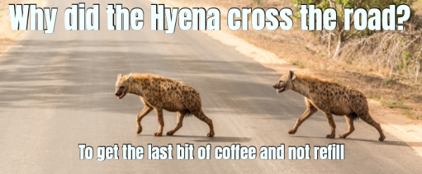why did the hyena cross the road?